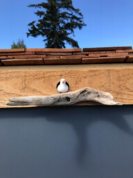 An Itty Bitty Seagull Finds A New Home